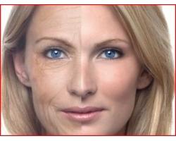 Как происходит старение организма?