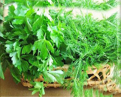 Весенняя зелень для здоровья